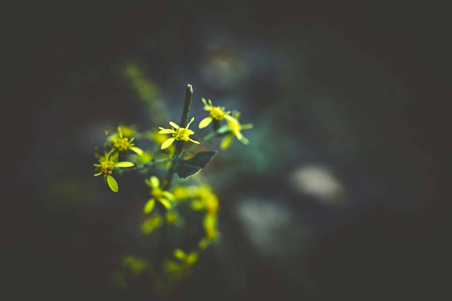 yellow-flowers-travel-photographer-marcus-lewis-40-percent-tiny-png