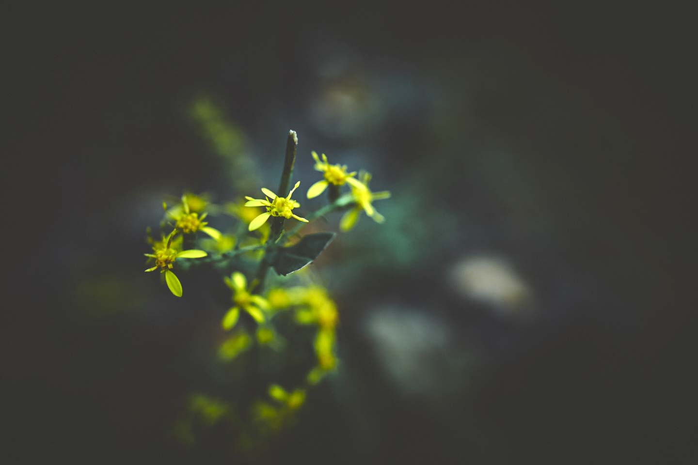 yellow-flowers-travel-photographer-marcus-lewis-40-percent